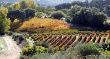 Vinos auténticos de España se dedica a comercialización, exportación y distribución de vinos