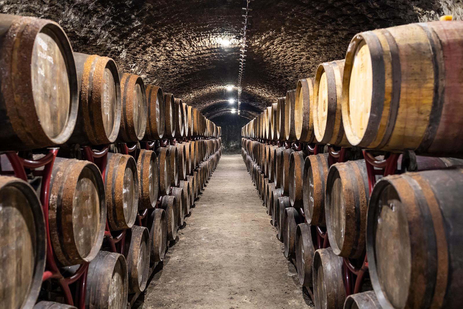 Bodega y cata de vino