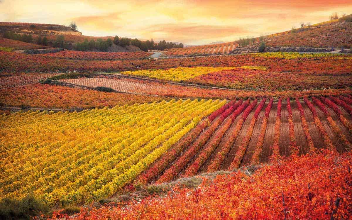 Viñedos de La Rioja Alavesa en otoño
