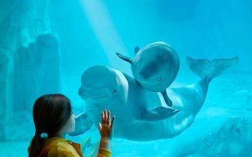 El Oceanográfico es una de las atracciones que ver en Valencia con niños
