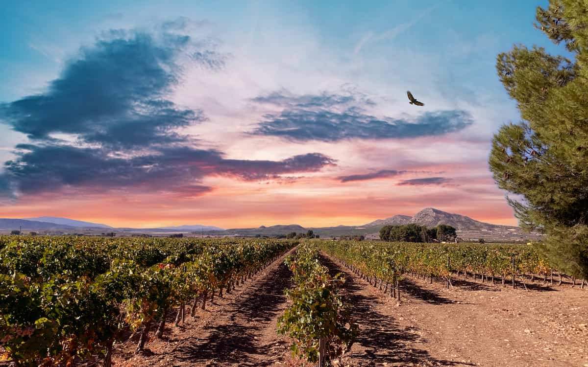 La Finca Casa Gallur es la nueva apuesta de Bodegas Vicente Gandía