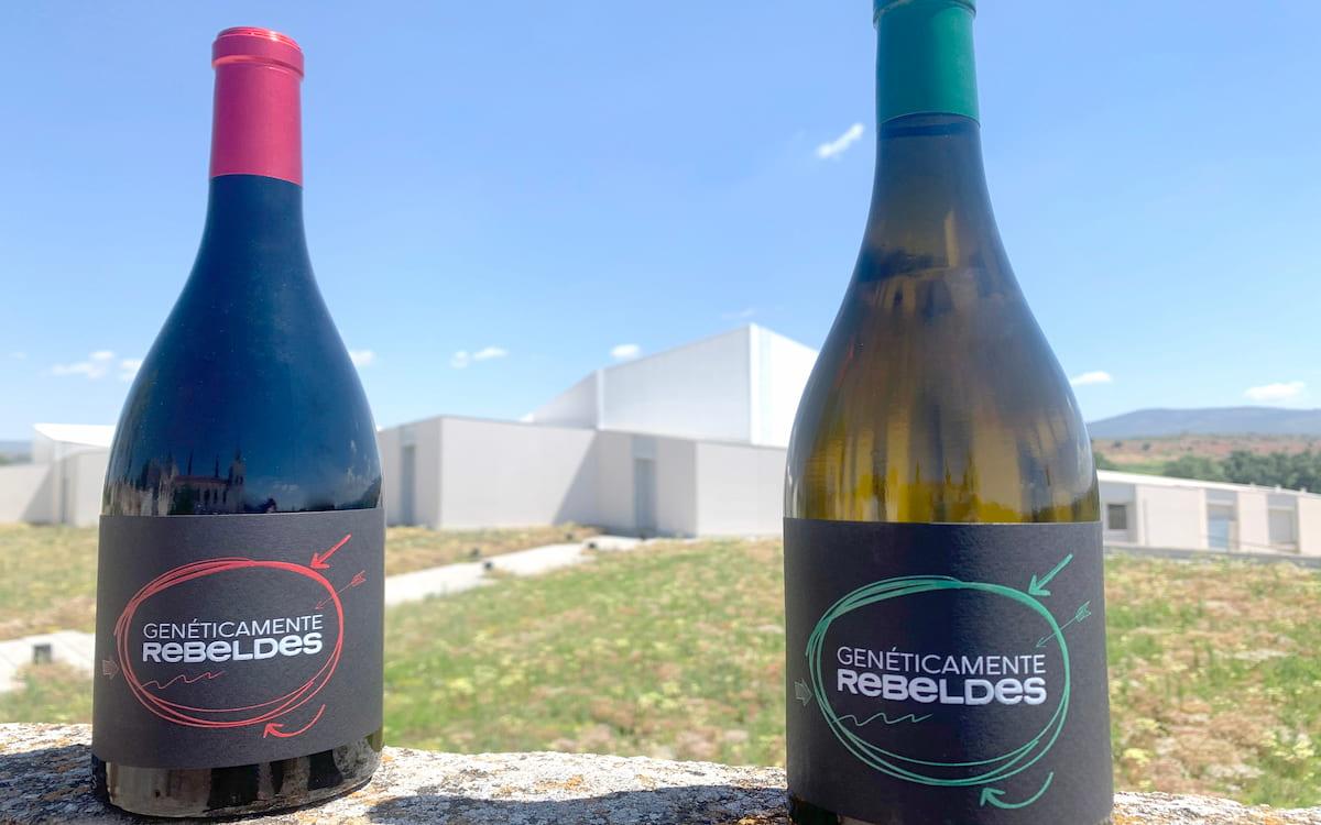 Sierra Norte y Asindown presentan vinos 'Genéticamente Rebeldes'