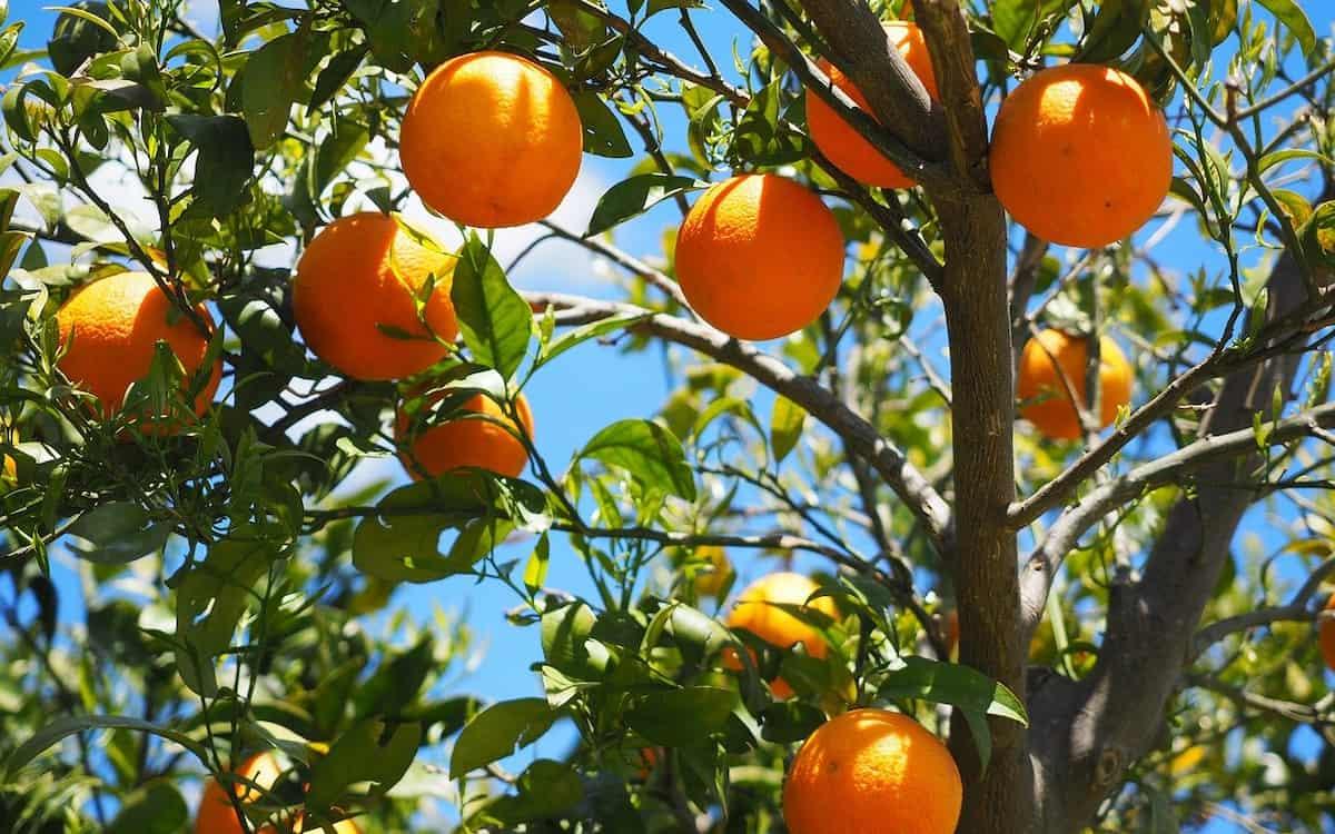 Frutas. Naranjas. Agroalimentario. (Imagen de Hans Braxmeier en Pixabay)